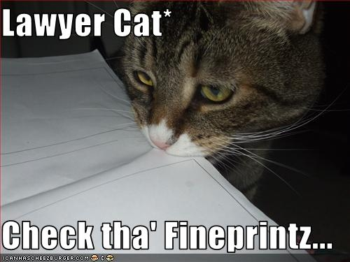 lawyer-cat3